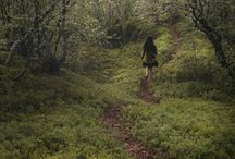 Into the woods / by Kathy Povolny