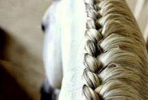 Hesttt