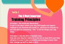 Cognitive dog training