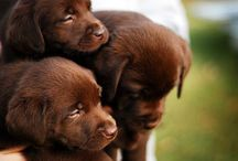 Dogs I want :)