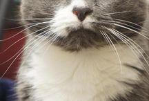 CAT END CAT