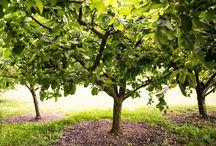 L'Orto / Il nostro orto dove coltiviamo frutta e verdura totalmente al naturale!