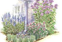 композиции посадка цветников