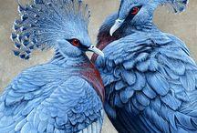 Vadon élő Galambok