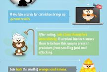 Animals and Pets Infographics