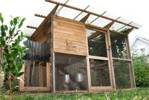 Chicken coops / love me a cool chicken coop.