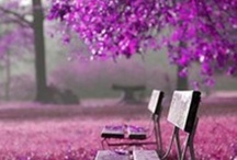 #Violet