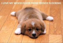 Best friendly pest's floor