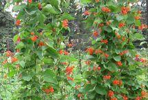 Kukka köynökset
