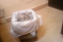 Cats  / by Sahar Al-Bishri