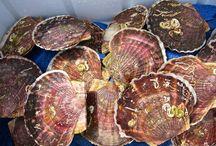 Splendid Seafood