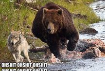 Teddybear..... / zawikłania przyrodnie....