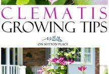 Tips on gardening