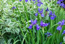 Perennials! / I wanna grow them all! / by Elaine