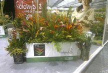 2012 Flower Expo