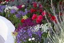 OGRODY / Kwiaty w ogrodzie.