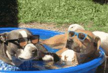 basen dla zwierzat