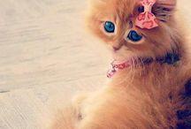 cute....
