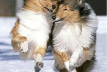Dogs / by Dorotha Davis
