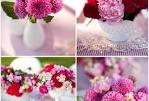Flores / Amo flores. E qualquer imagem de flores ou fotos especiais a respeito do assunto me seduz.