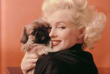 Famous People w/Pets / by Barbara Richter