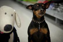 Max / Max ist KimMy's Hund und ihr Ein und Alles.