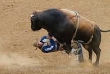 Bull Riding / by Claudia Wulf