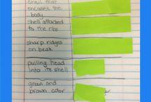 Adaptation inquiry ideas