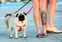 Valentina Pug / My dog, my doughter, my love, my life!