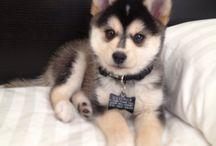 Puppies)