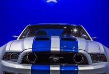 Dreamed beauties / Mustang$$