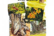 Leonardo Collection Desen Tamamlama Kitapları / Online Alışveriş www.sanatsa.com Hobi & Sanatsal Malzemeler
