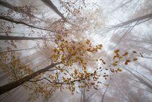 Xavier Manrique - Somnis ocults / Per fotografia de naturalesa s'entén aquella que s'emmarca dins d'imatges de paisatges, fauna, flora i petits detalls d'aquesta. Les seves fotografies són treballs d'orfebreria, exquisides, perfectament equilibrades, de llum evocadora i vibrant. Pura poesia visual, on la natura s'expandeix a través de la lent de Xavier Manrique i ens arriba a nosaltres tenyida d'emoció.