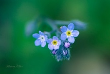 Flower Photography / To describe the beauty of the world
