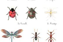 Insectes .