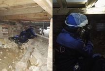 Termite Inspection and Treatment Sydney Australia