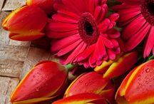 He comes forth like a flower♥Job14:2♥