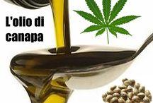 L'olio ricco di omega 3 e omega 6 / Olio di canapa