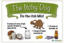 oily essentials for pets