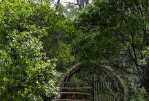 Belles forêts
