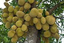 Bangladesh fruit veggies for thyroiditis