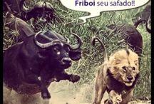 Ⓟe♈ Humor Animal ☺ / Tiras, Comics e Memes sobre o mundo dos animais.