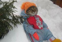 Trop cute / Ces chat son cute vraiment cute est drôle aussi
