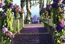 Outdoor Weddings / Ceremony Seating and Backdrops