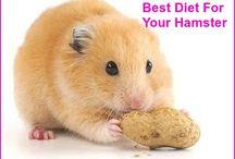 jadyns hamster