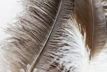 Feather***
