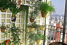 Urban gardens / Gardens at balconies