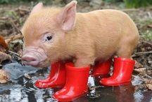 Pig in a Poke / by Melanie Murphy
