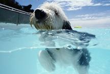 Hondenplons - foto