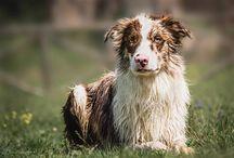 Dogs / I miei scatti di cani